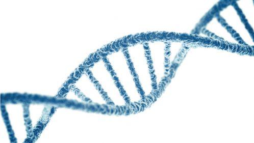 ADN prévoir son avenir