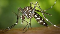 Moustique Tigre virus Zika