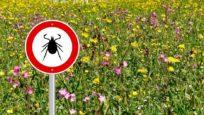 Maladie de Lyme : la menace des tiques