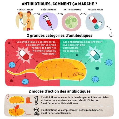 Antibiotiques infographie - crédit Clément Perrotte