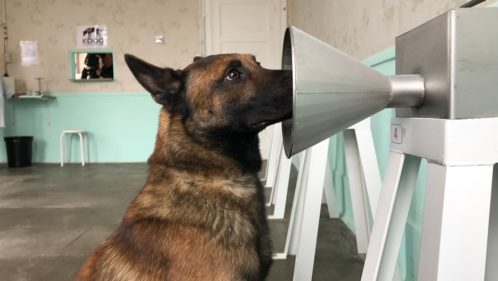 Quand les chiens « détectent » des maladies