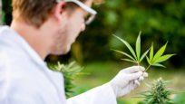 Le cannabis thérapeutique bientôt prescrit en France ?
