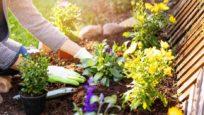 Plantes et fleurs : attention à leur toxicité